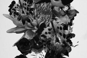 Mujuice. Metamorphosis