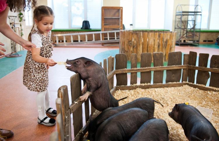 В Петербурге открылся контактный зоопарк сети «Лесное посольство»