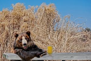 Медведи-алкоголики останутся в Подмосковье