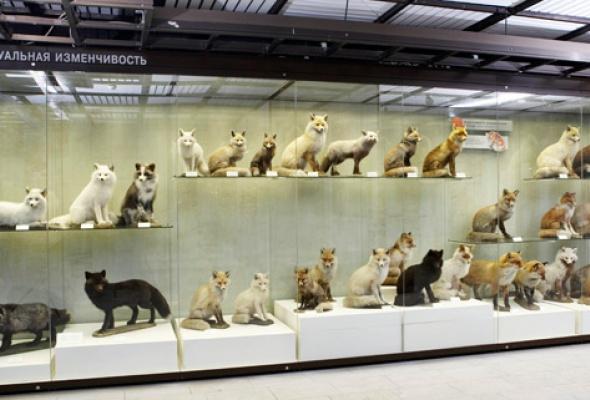 Дарвиновский музей - Фото №11