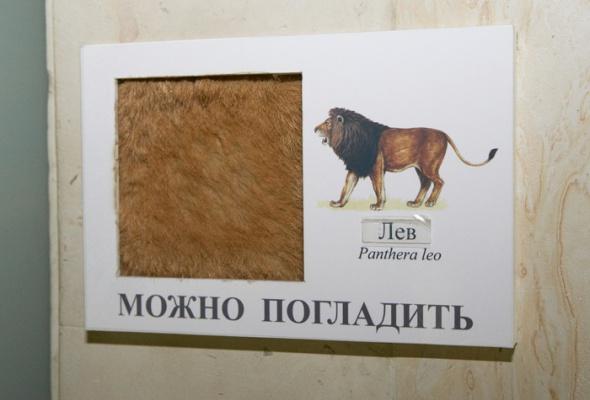 Дарвиновский музей - Фото №8
