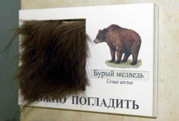 Дарвиновский музей - Фото №7