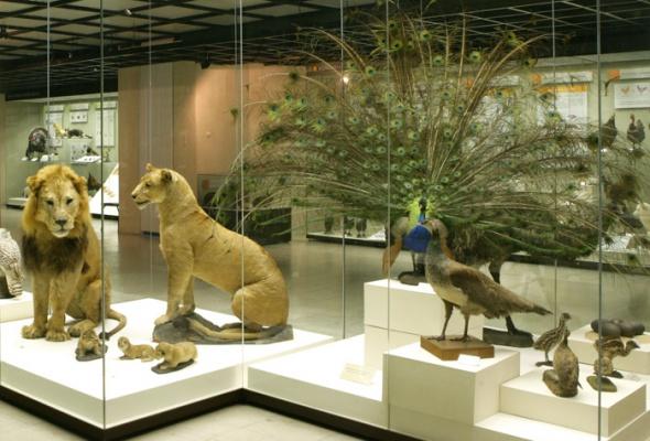 Дарвиновский музей - Фото №6