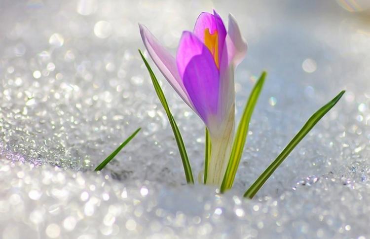 Весна пришла: прогноз погоды с 29 февраля по 6 марта