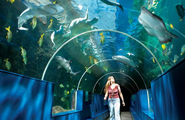 В Петербурге появится еще один океанариум