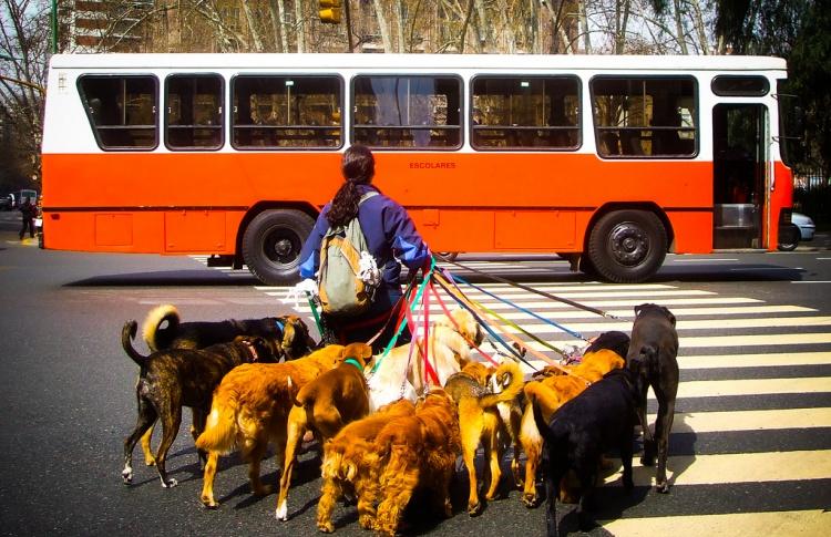 Как перевозят животных в разных странах