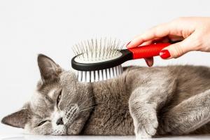 Как обезопасить кошку от комочков шерсти в желудке