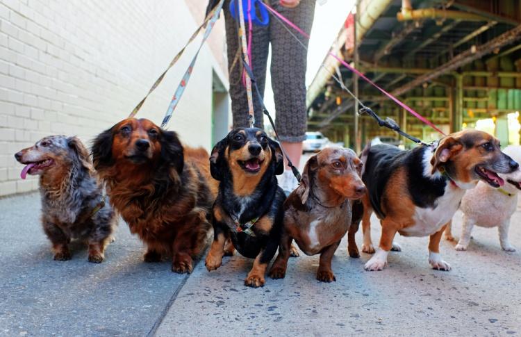 Службы выгула собак