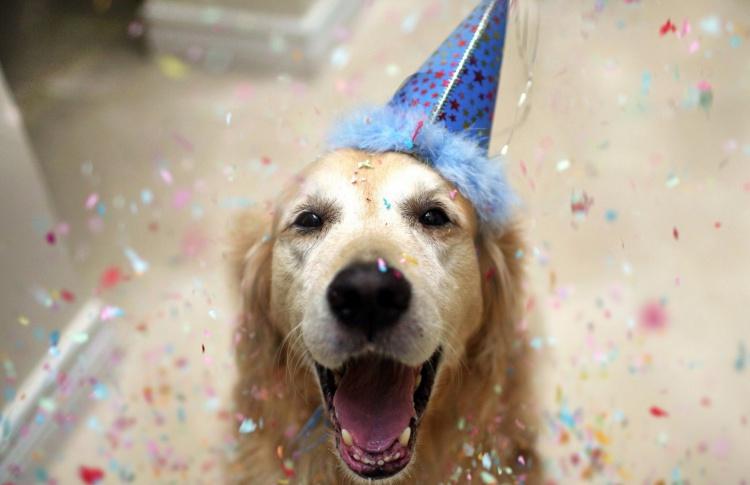 Happy Birthday, Mr. President: Как отпраздновать день рождение питомца?