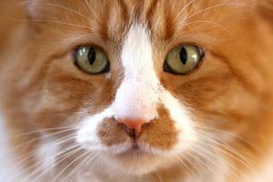 Деликатный вопрос: туалетные манеры котов