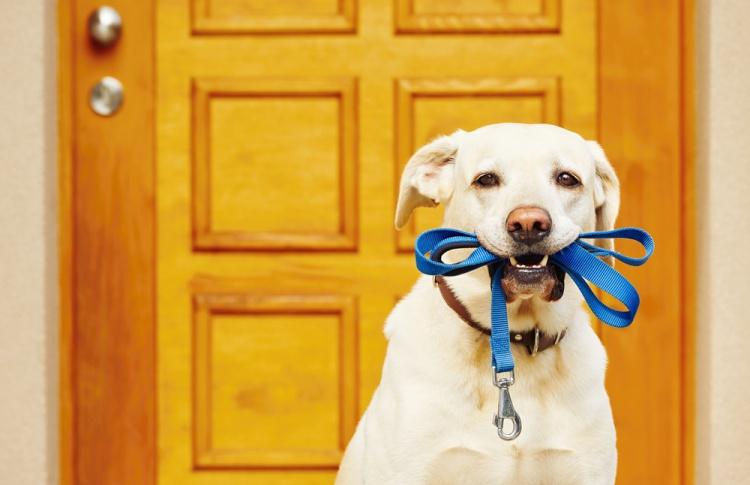 Правила хорошего тона: что нужно для выгула собаки
