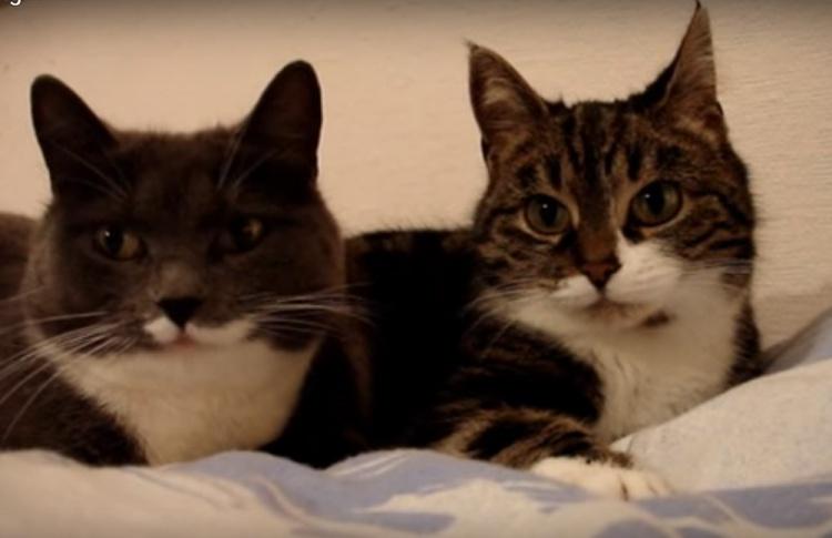 10 видео с котами, которые набрали больше всего просмотров на YouTube