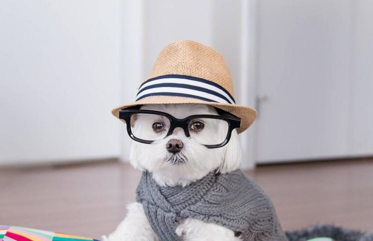 12 знаменитых животных-блогеров