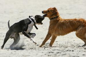 Собачьи конфликты на улице. Как избегать сложных ситуаций. Советы кинологов