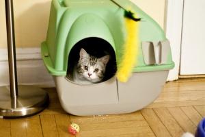 Как выбрать лоток и наполнитель для кота?