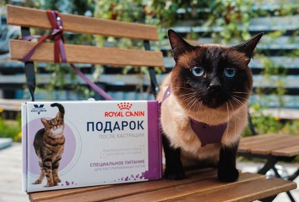 Royal Canin запускает в Москве и Санкт-Петербурге бесплатные ветмобили - Фото №4