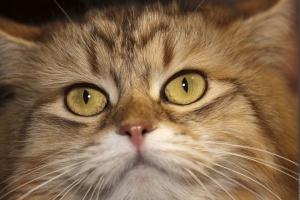 Не стоит бояться: берем животное с инвалидностью