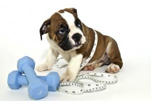 «Перевес!» — сколько должен весить ваш питомец