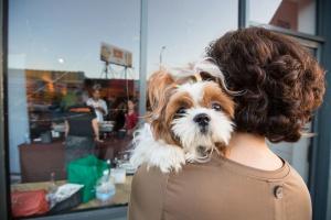 Найти друга можно на июльской выставке собак из приютов