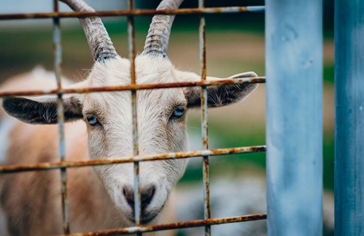 Госдума запретит контактные зоопарки