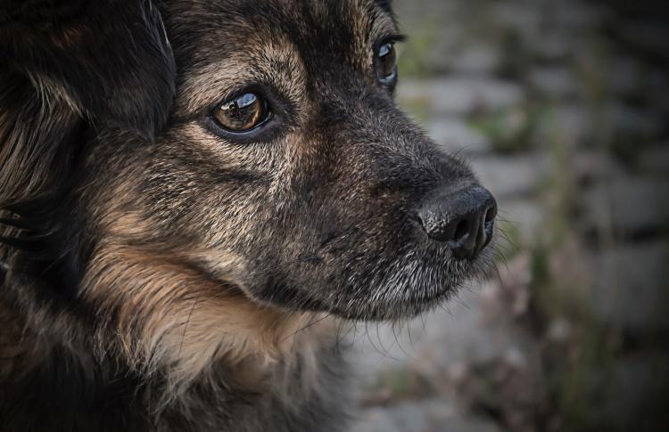 В Дагестанском приюте неизвестные избили собак