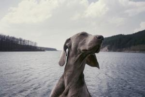 Отдыхаем с питомцем: отели для людей и животных