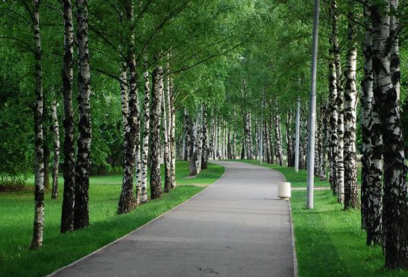 Парк им. 50-летия Октября - Фото №3