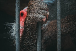 Онлайн-браконьерство: в Китае борются с продажей диких зверей через мессенджеры