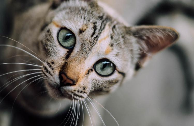 Гельминтоз: Как защитить кошку