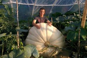 В «Аптекарском огороде» покажут гигантскую 400-килограммовую тыкву