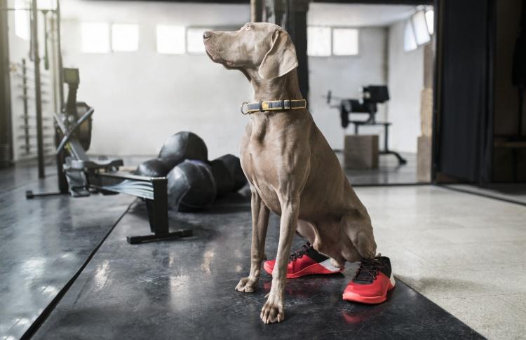 В ветеринарных клиниках Москвы могут появиться беговые дорожки для собак