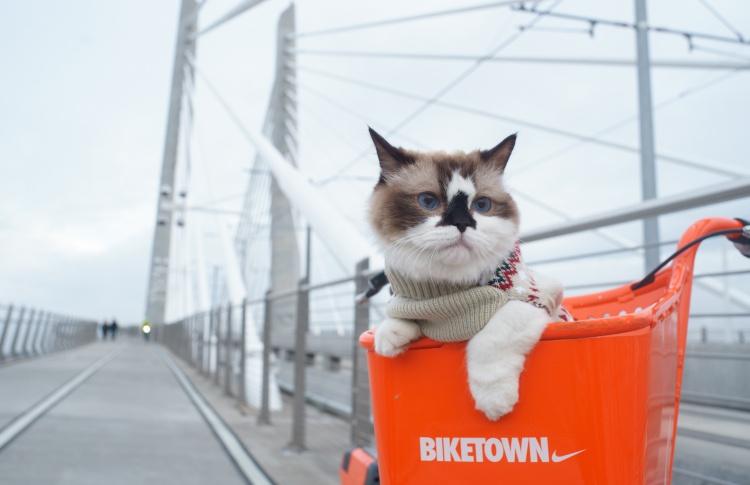 В Японии запустили первый в мире котопоезд