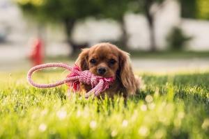 Выбираем правильные игрушки для кошек и собак