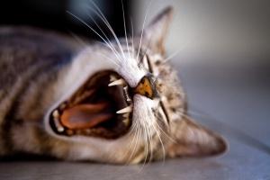 Ученые выяснили, почему коты становятся вредными