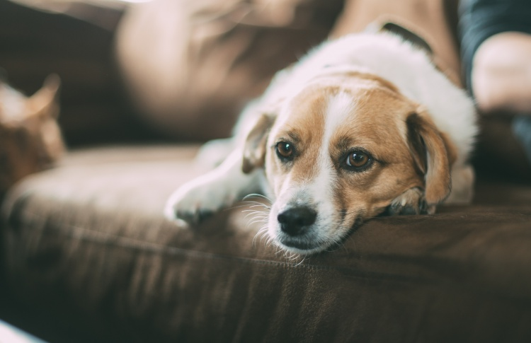 Почему собаки любят смотреть телевизор