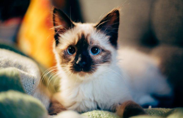 4 октября отмечается Всемирный день защиты животных