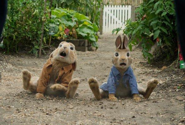 Кролик Питер - Фото №2