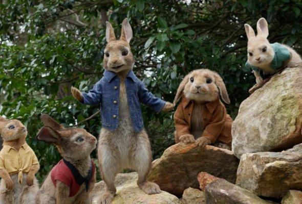 Кролик Питер - Фото №0