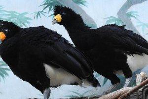 В Московском зоопарке завелись птицы-собаки
