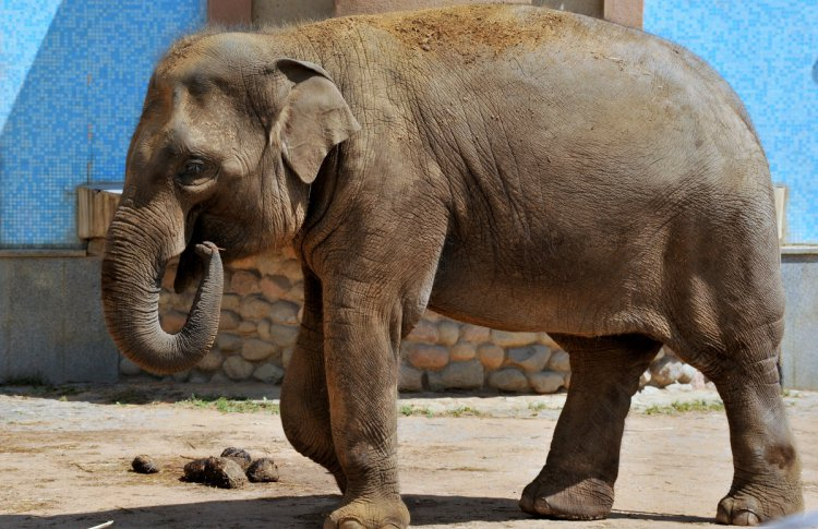Трем слонятам из Мьянмы дадут имена по конкурсу