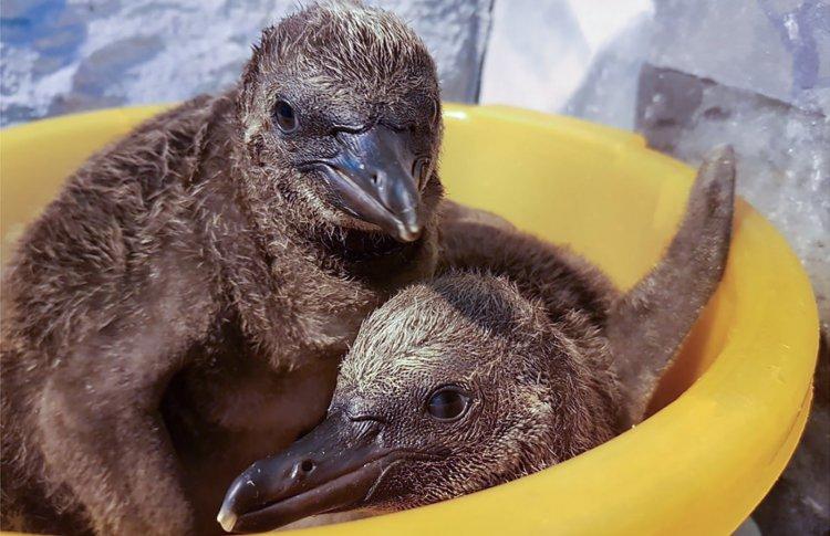 В зоопарке Москвы вылупились первые птенцы