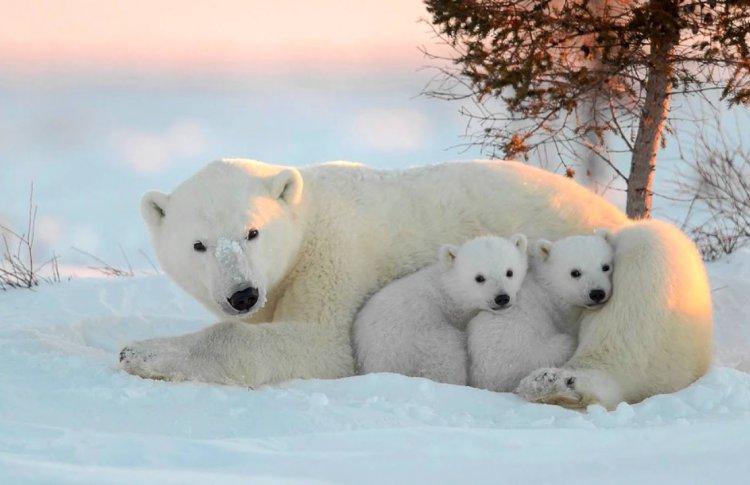 Зоопарк ждет людей в белом в День белого медведя