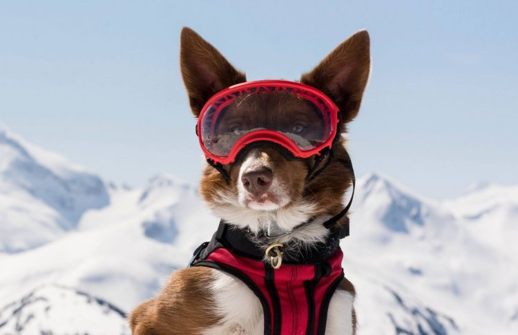 Подвиги четвероногих: 5 фильмов о собаках-героях