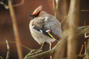 В «Благосфере» расскажут о птичьих правах