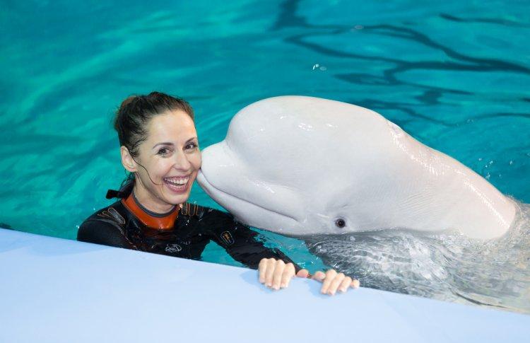 Куда пойти на каникулах: шоу «Дельфины Северной столицы»