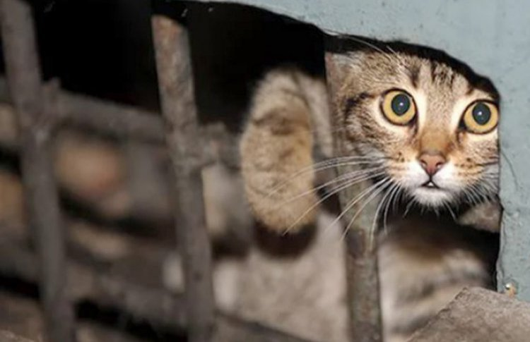 Подвалы домов должны быть открыты для животных