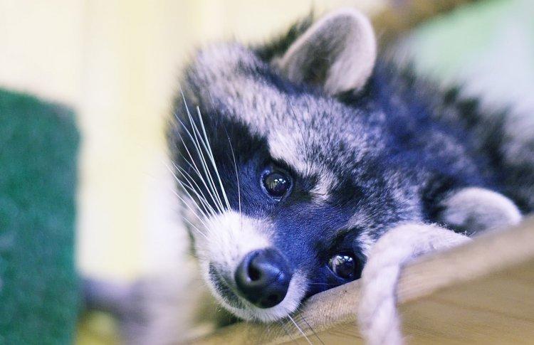 В «Сокольниках» из-за жестокости к животным закрыли контактный зоопарк