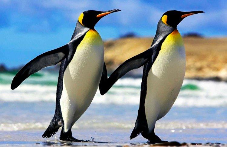 В Биологическом музее Москвы пройдет День осведомленности о пингвинах