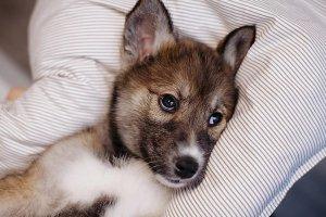 ИКЕА создала на сайте раздел с домашними животными