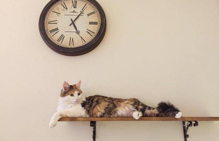 Пить кофе, гладить кота: 8 антикафе с животными в Москве